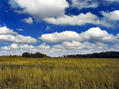 cumulus humilis.jpg