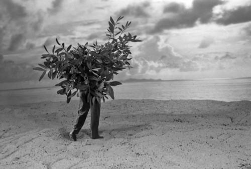 405-l-arbre-qui-voulait-voir la mer - Gilbert Garcin - 2009.jpg