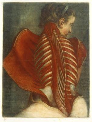 ange-anatomique.jpg